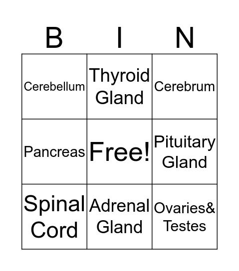 Endocrine & Nervous System Bingo Card