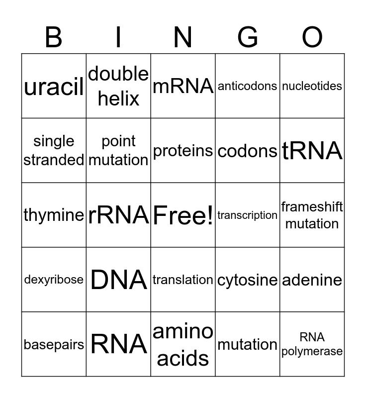 DNA & RNA  Bingo Card