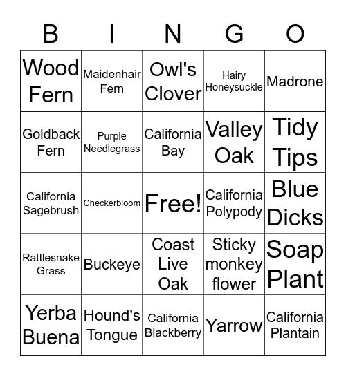 Plants of Edgewood Park Bingo Card