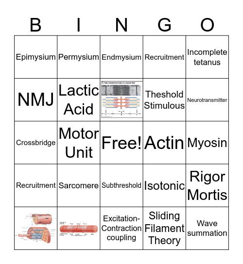 Muscular Bingo Card