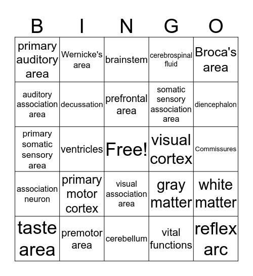 The Central Nervous System Module 8 Bingo Card