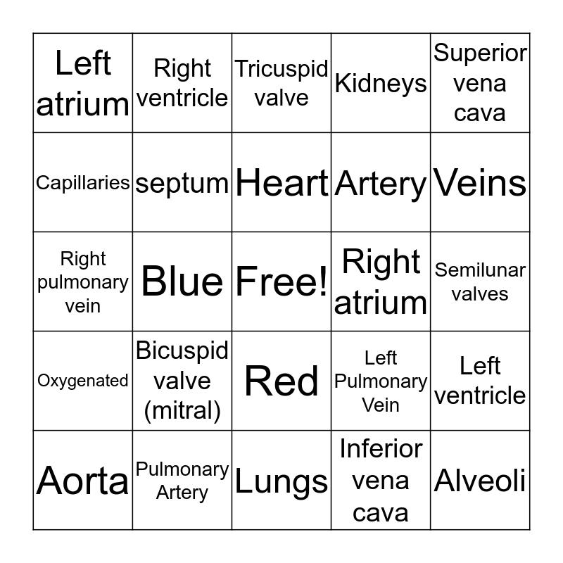 Circulatory Cystem Bingo Card