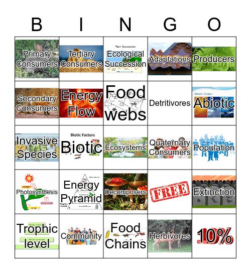 Food Chains & Webs Bingo Card