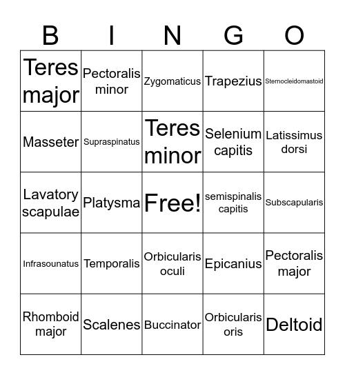 Musco Bingo Card
