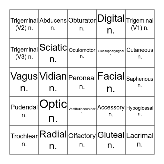Cranial Nerves Bingo Card