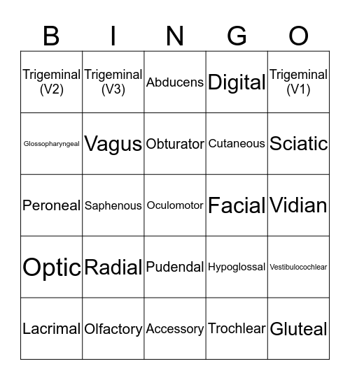 Cranial Nerves Bingo Card