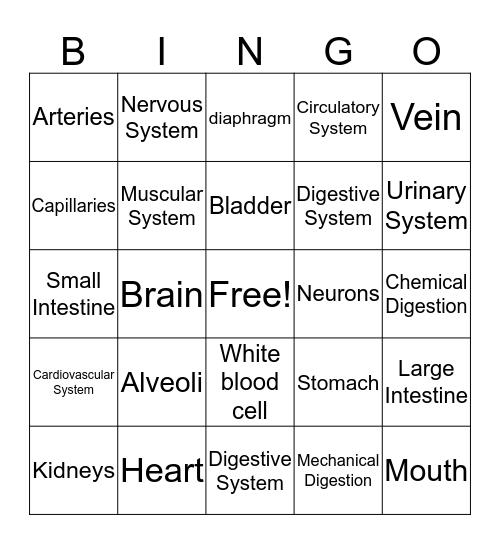 Body Systems Bingo Card