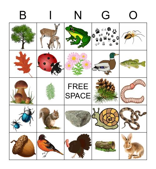 Nature gpk1 Bingo Card