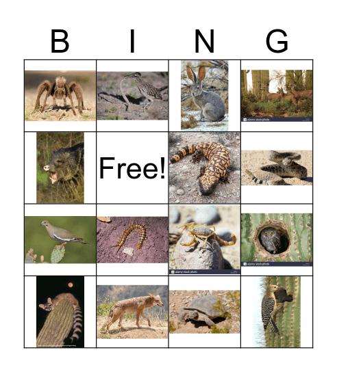 Desert Adaptations Bingo Card
