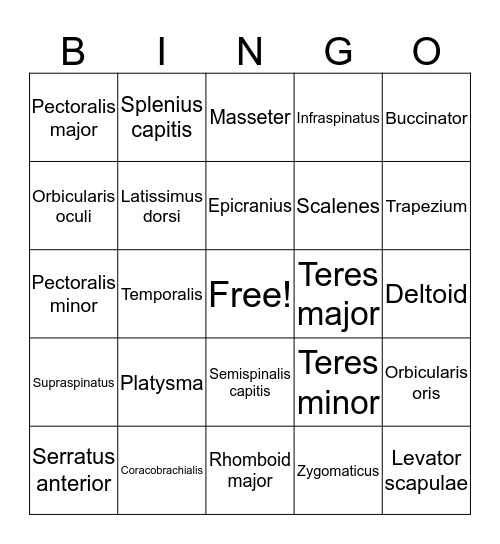 List 1 muscles Bingo Card