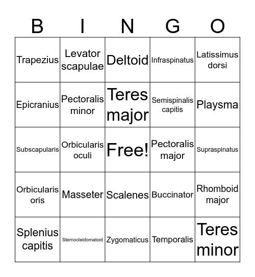 Muscle List 1 Terms Bingo Card