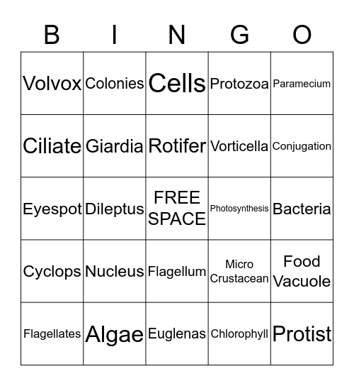 Life In a Drop of Water Bingo Card