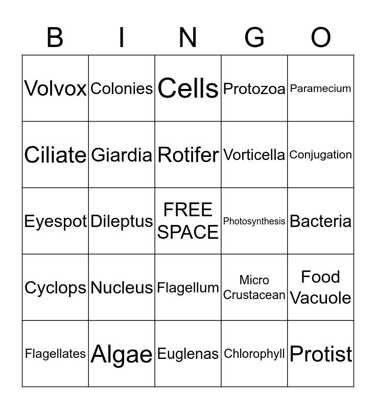 Life In a Drop of Water Bingo Card