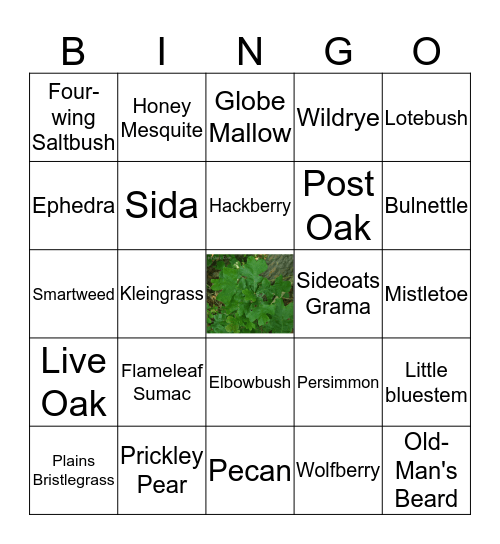 Wildlife Plant ID Bingo Card