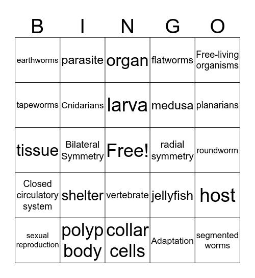 Sponges, Cnidarians, Worms Bingo Card