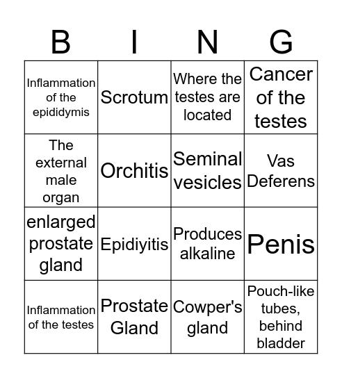 Male Reproductive System Bingo Card