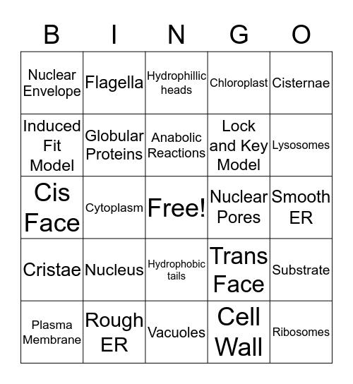 Cell Biology Bingo Card