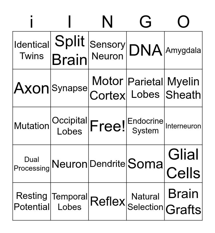 Biological Basis in Behavior Bingo Card