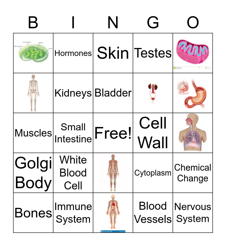 Cell Organelles and Body Systems Bingo Card