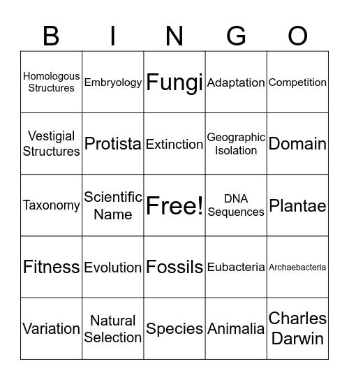 Evolution Bingo Card