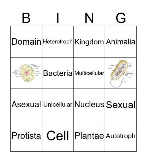 Cells & Classification Bingo Card