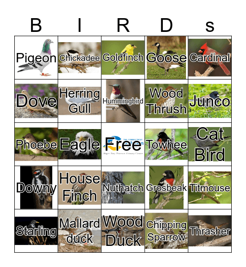 Birds Bingo Card