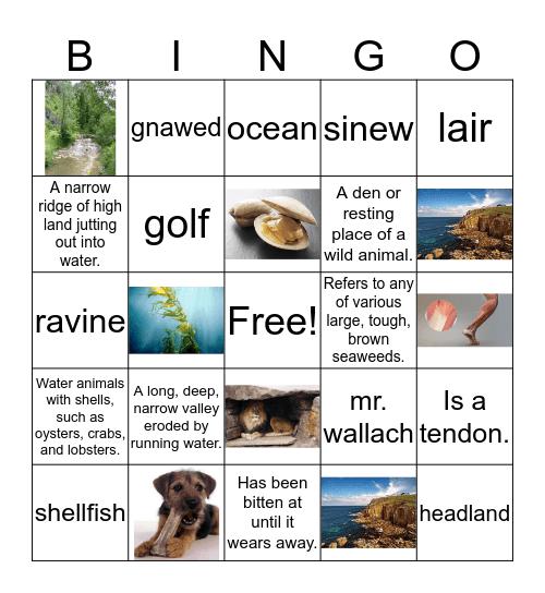 Week 3 Vocabulary Words Bingo Card