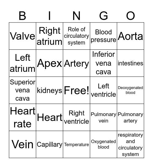 Circulatory System Review Bingo Card