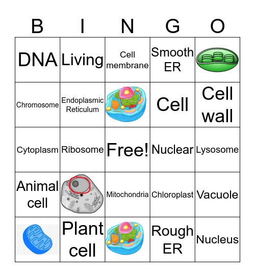 Cells and Organelles Bingo Card