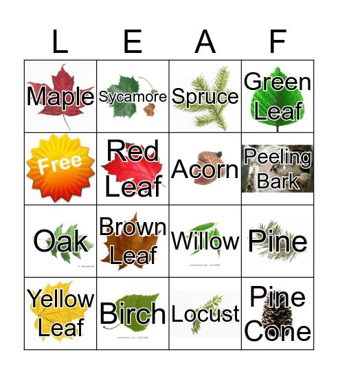 Leaf Bingo Card