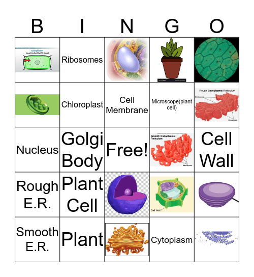 Plant Cells Bingo Card