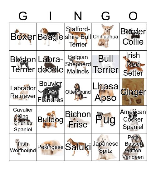 DOG BINGO Card