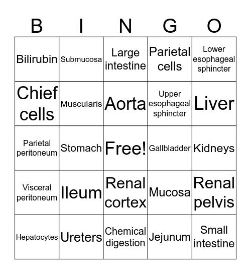 Abdomen Bingo Card