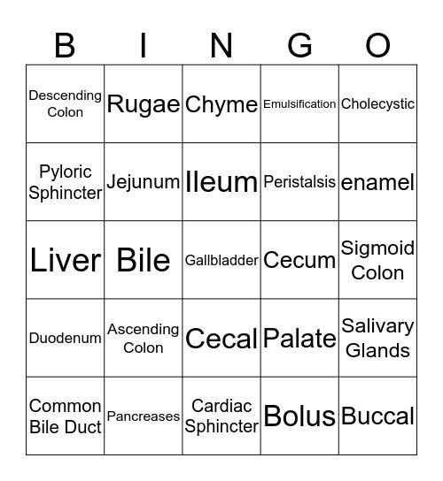 Digestive system anatomy Bingo Card