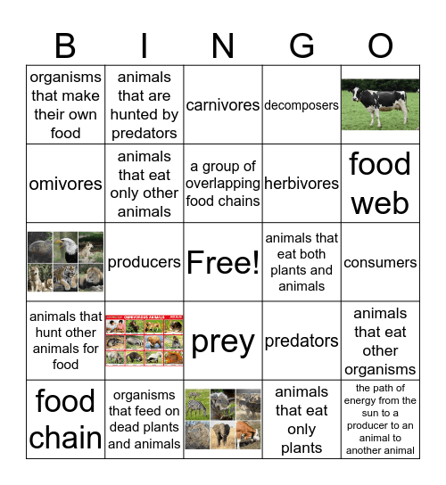 Food Chains and Food Webs Bingo Card