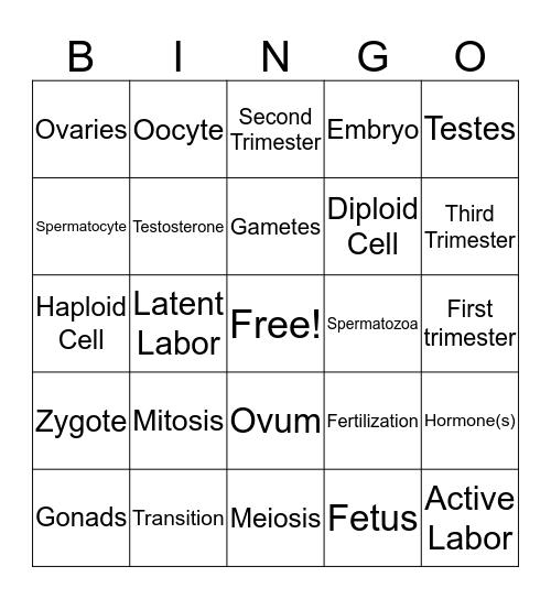 Anatomy Bingo Card