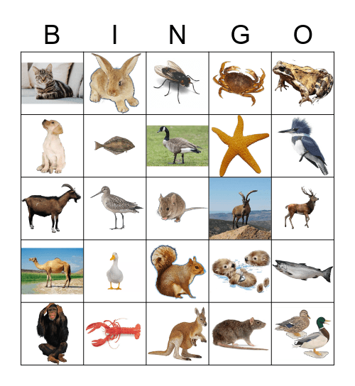 Animals Bingo Card
