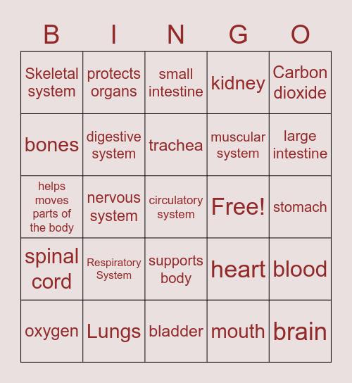 Human Body Bingo Card