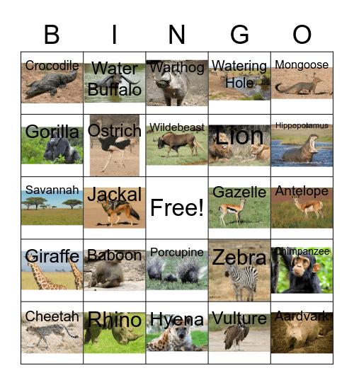 Safari Bingo Card