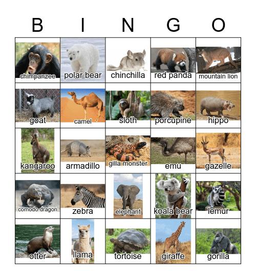 Zoo Animals Bingo Card
