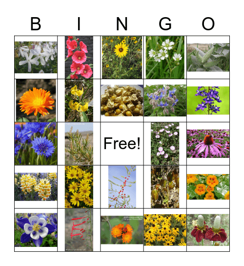Flowers  Bingo Card