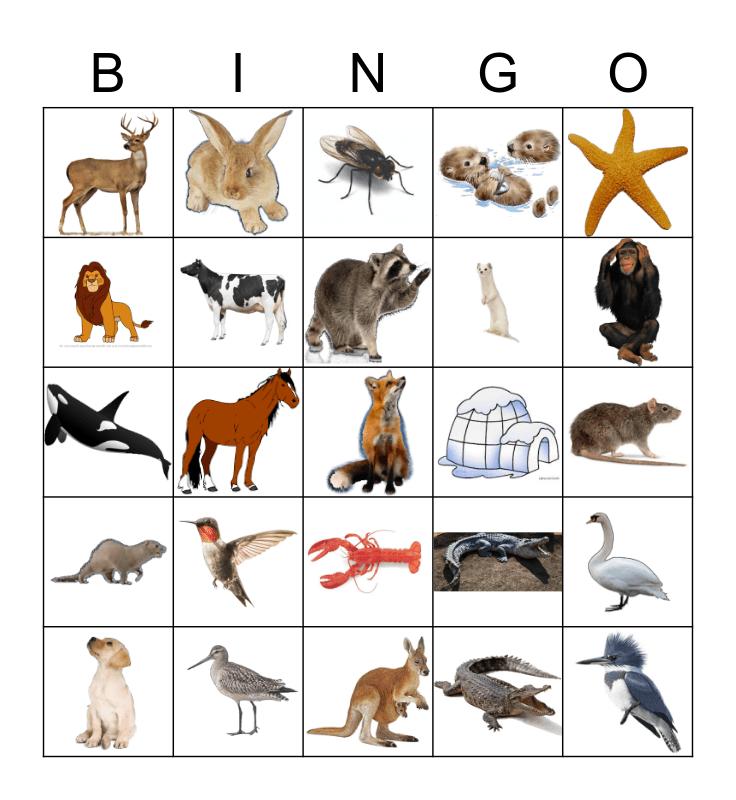 Animals Bingo Card