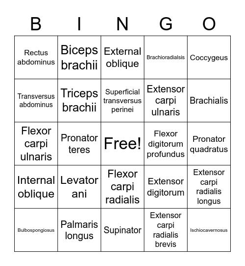 Muscles Bingo Card