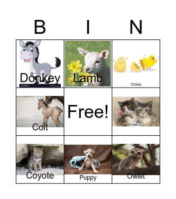 Singing Animal Bingo Card