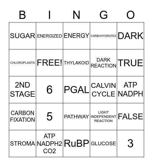 CALVIN CYCLE Bingo Card