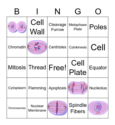 Mitosis Bingo Card