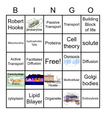 Cells and Transport Bingo Card