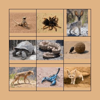 Desert Animals Bingo Card
