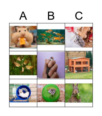 Cuidemos a nuestras mascotas Bingo Card