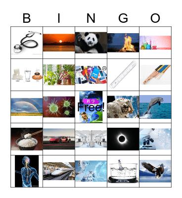 科学 Bingo Card
